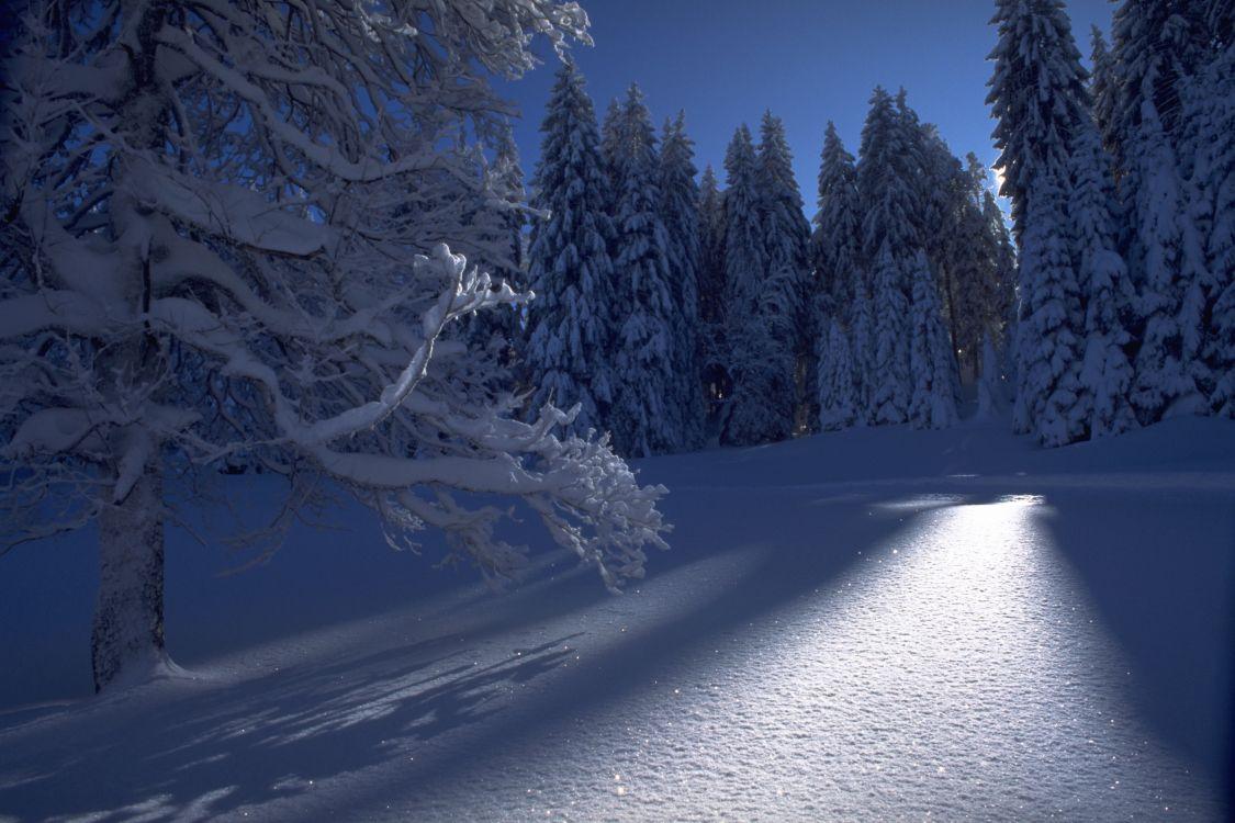 зима природа фото гифки последнее время элиста