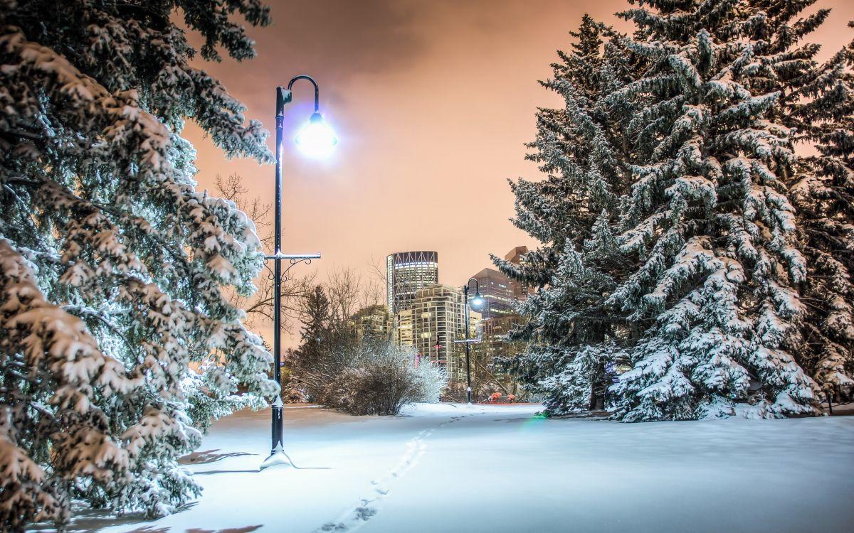 совсем самые лучшие фото зимы в городе она