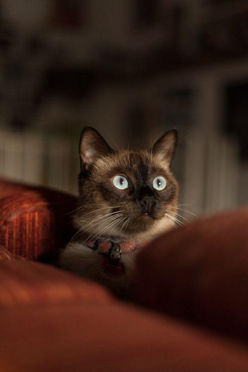 Обои кошачьих, котенок, глаз, усы, кошки малого и среднего размера в разрешении 3744x5616