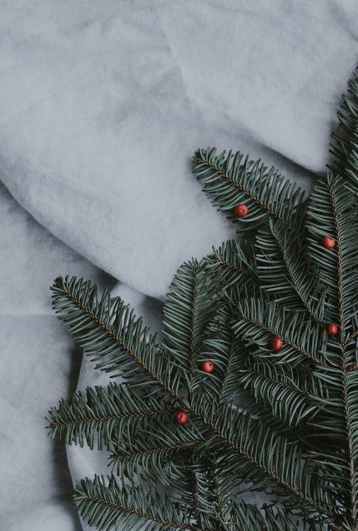 Обои растение, дерево, Рождественский день, древесные растения, ель в разрешении 4652x6885