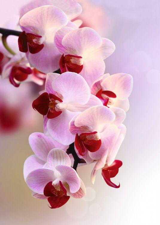 информации фото цветов для печати высокого качества система очистки очень