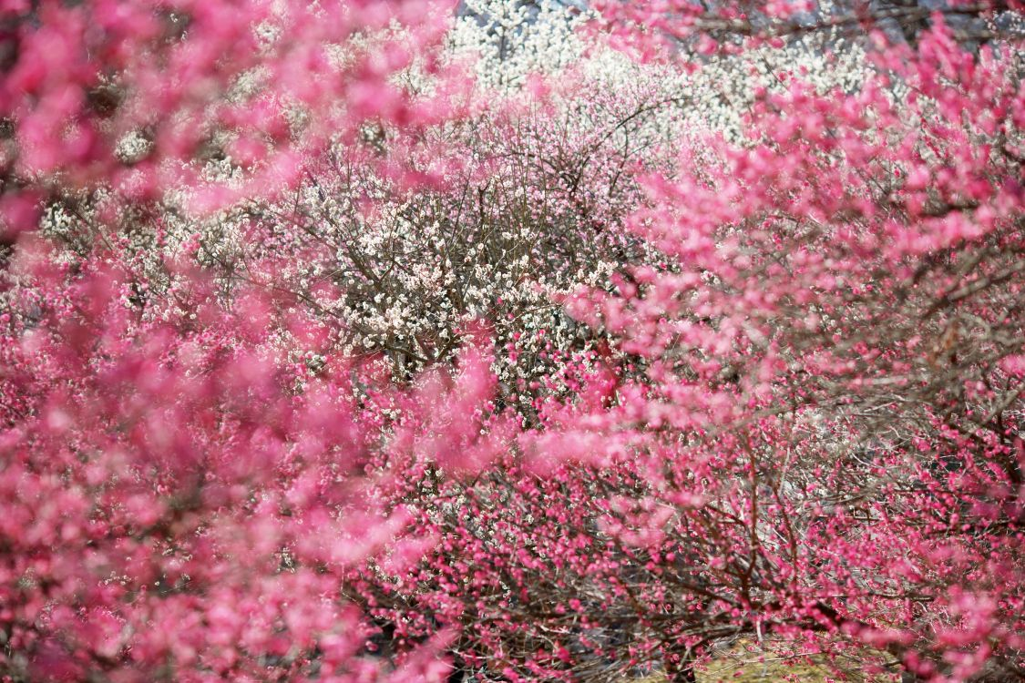 Картинки с розовыми тонами
