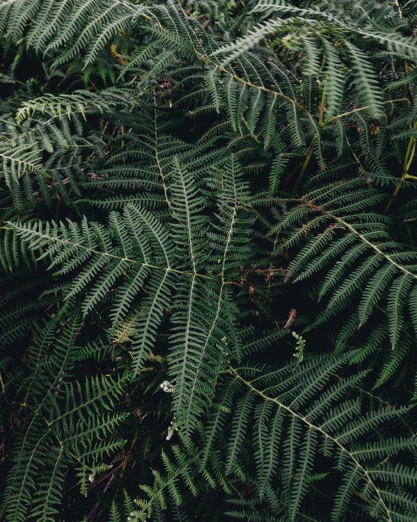 Обои рассада, лист, папоротник, наземное растение, растительность в разрешении 2766x3458