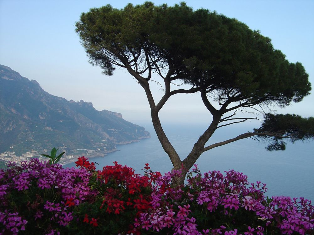 Обои цветок, Флора, горная станция, растительность, пейзажи гор в разрешении 2592x1944