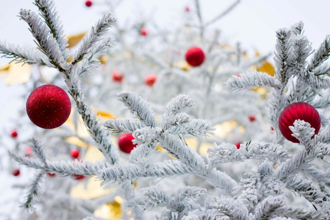 картинки зима природа новый год лобода знает