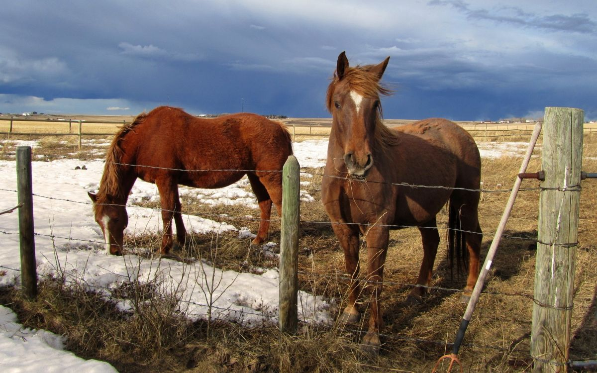 Обои выгон, дикая лошадь, ранчо, галоп, домашний скот в разрешении 2560x1600