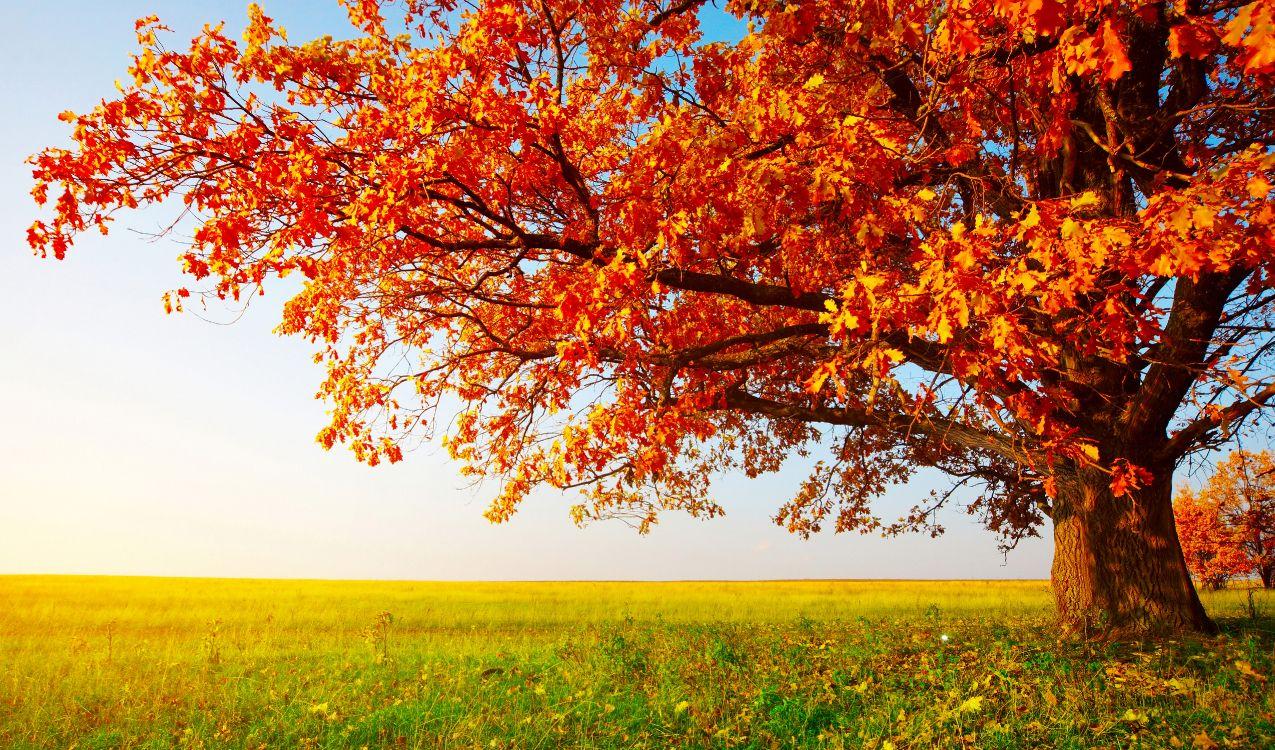 природа картинки осень природа на рабочий стол хорошее качество нем