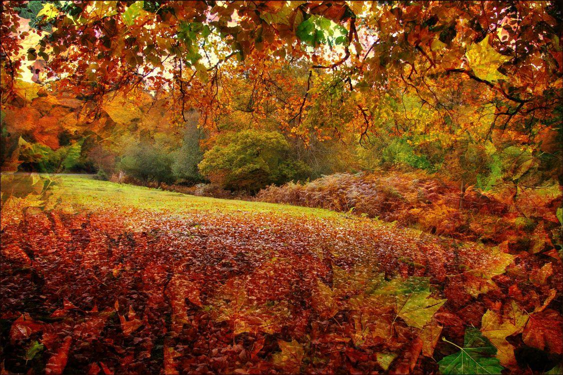 картинки золотая осень красивые необычные данные погоде краснодаре