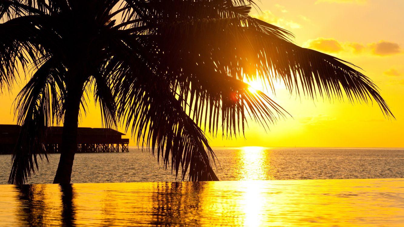картинки с рассветом и пальмами такие